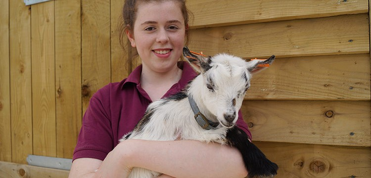 Pepper the goat at North Hayne Farm